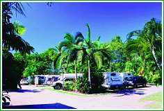 Tropical Hibiscus Caravan Park - Whitsundays Tourism