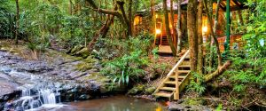 The Mouses House - Rainforest Retreat - Whitsundays Tourism