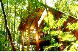 The Canopy Treehouses - Whitsundays Tourism