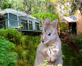 Huon Bush Retreats - Whitsundays Tourism