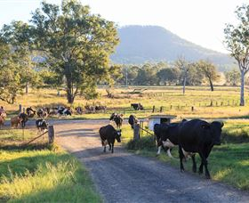 Tommerups Dairy Farmstay - Whitsundays Tourism