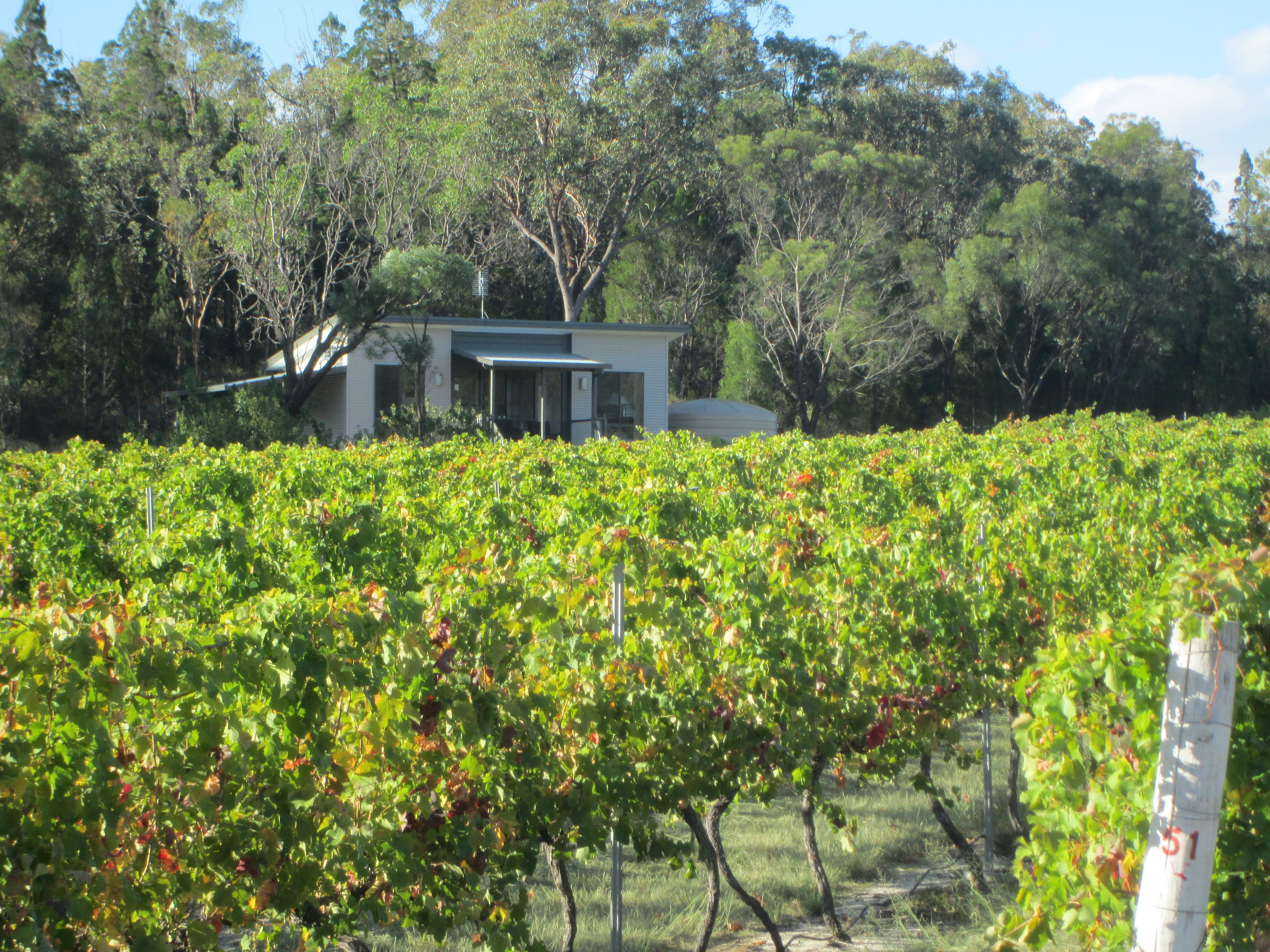 Just Red Wines Vineyard Cabins - Whitsundays Tourism