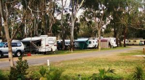 Buronga Riverside Tourist Park - Whitsundays Tourism