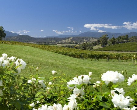 Balgownie Estate Vineyard Resort and Spa - Whitsundays Tourism