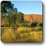 Uluru - Kata Tjuta National Park - Whitsundays Tourism