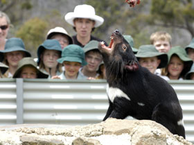 Tasmania Zoo - Whitsundays Tourism