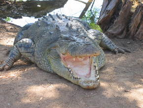 Wyndham Zoological Gardens And Crocodile Park - Whitsundays Tourism