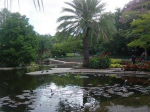 Brisbane City Botanic Gardens - Whitsundays Tourism
