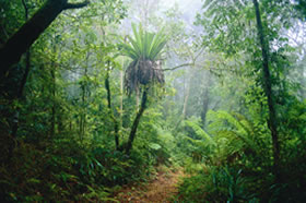 Lamington National Park and OReillys - Whitsundays Tourism