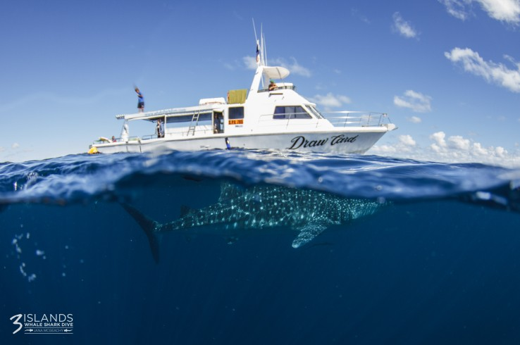 Three Islands Whale Shark Dive