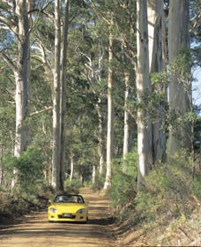 Mount Shadforth Scenic Drive - Whitsundays Tourism