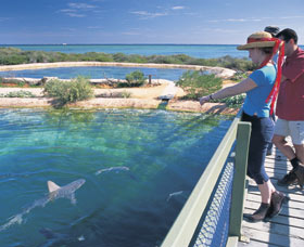 Shark Bay Marine Park
