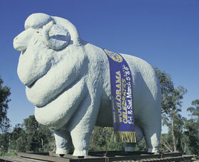 Giant Ram Tourist Park - Whitsundays Tourism