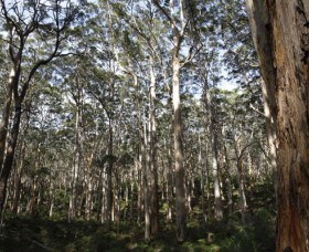 Boranup Karri Forest - Whitsundays Tourism