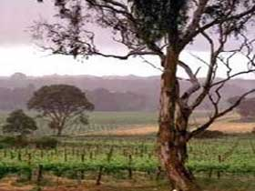 Yangarra Estate Vineyard