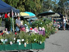Meadows Monthly Market - Whitsundays Tourism