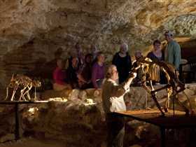 Naracoorte Caves National Park - Whitsundays Tourism