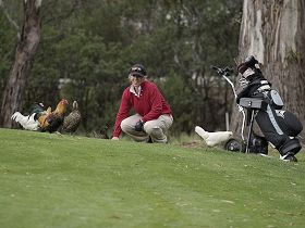 Tasmania Golf Club - The - Whitsundays Tourism