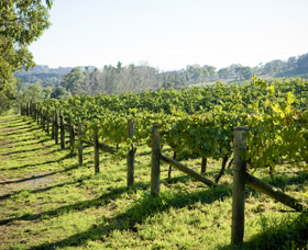 Surveyor's Hill Vineyards - Whitsundays Tourism