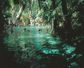 Mataranka Thermal Pool - Whitsundays Tourism
