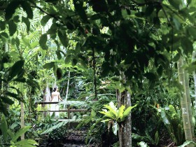 Flecker Botanic Gardens - Whitsundays Tourism
