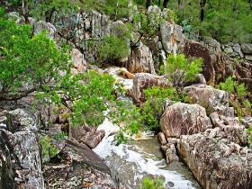 Crows Nest National Park - Whitsundays Tourism