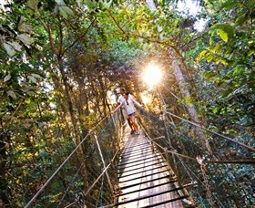 Tree Top Walkway - Whitsundays Tourism