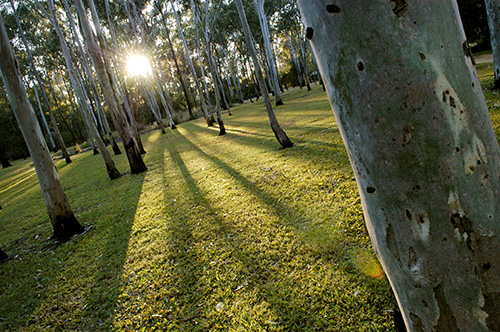 Tondoon Botanic Gardens - Whitsundays Tourism