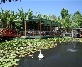 Blue Lotus Water Garden - Whitsundays Tourism