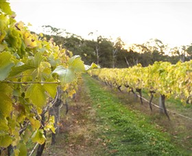 Harcourt Valley Vineyards - Whitsundays Tourism