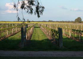 Water Wheel Vineyards - Whitsundays Tourism