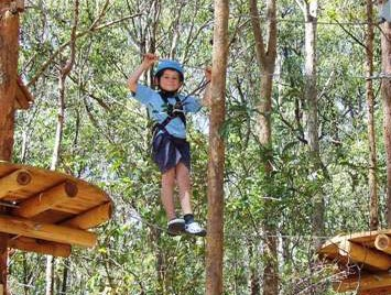 TreeTops Newcastle - Whitsundays Tourism