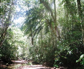 Mount Lewis National Park - Whitsundays Tourism