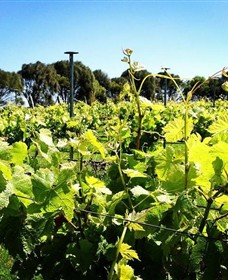 Basalt Wines - Whitsundays Tourism