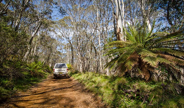 Barrington trail - Whitsundays Tourism