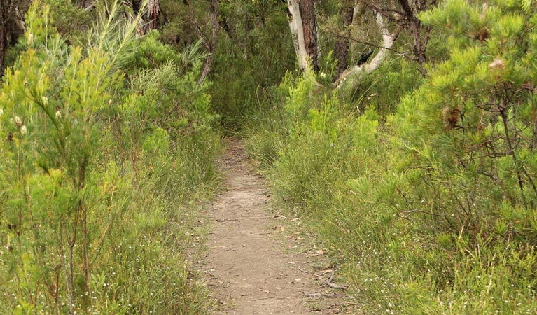Three Views walking track - Whitsundays Tourism