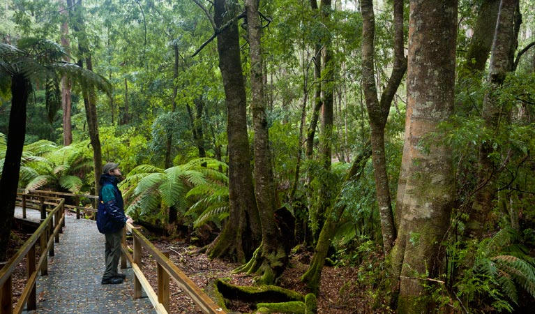 Monga National Park - Whitsundays Tourism
