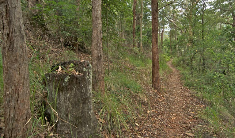Border loop walk - Whitsundays Tourism