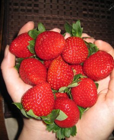 The Strawberry Farm - Whitsundays Tourism