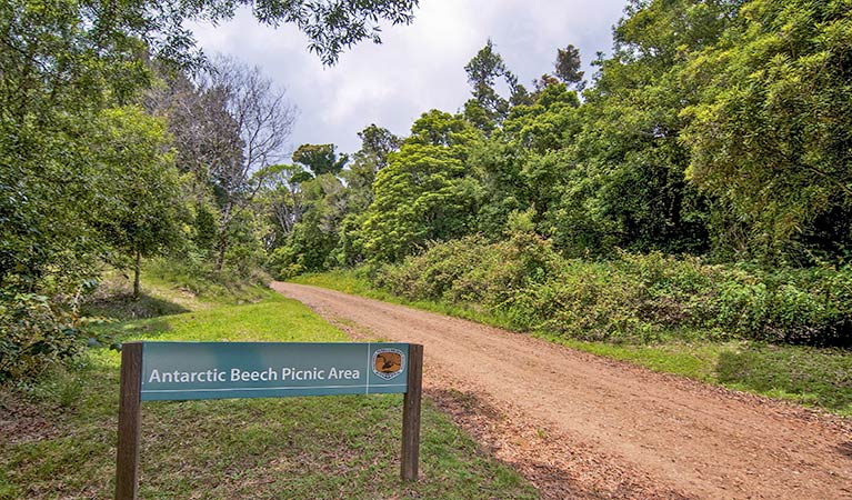 Antarctic Beech picnic area - Whitsundays Tourism