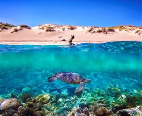 Snorkel the Ningaloo Reef