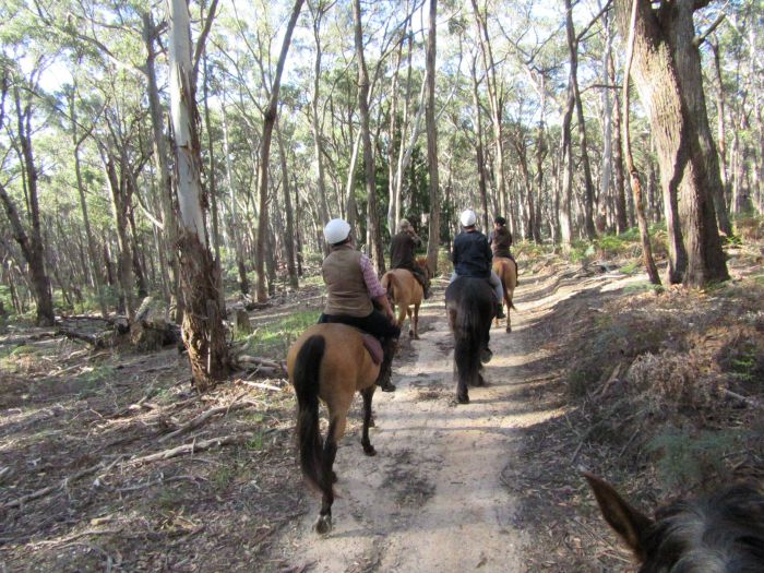 Silver Brumby Trails - Whitsundays Tourism