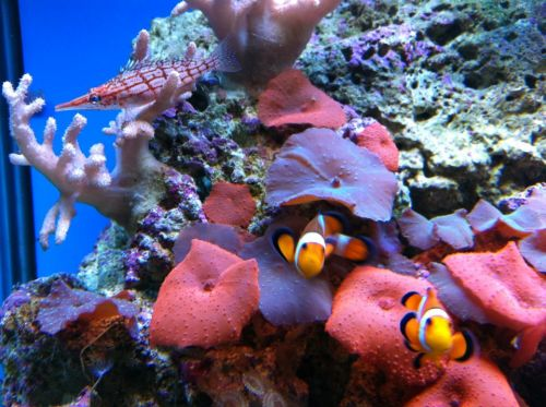 Tropical Marine Centre - Whitsundays Tourism