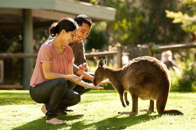 Very Best of Perth Tour - Wildlife Park  City Highlights Tour