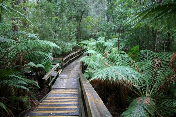 Small-group Hastings Caves and Tahune Forest AirWalk Tour from Hobart - Whitsundays Tourism