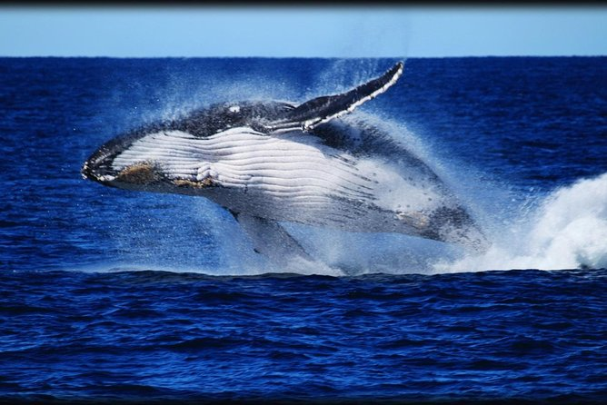 Whale Watching Cruise from Redcliffe Brisbane or the Sunshine Coast - Whitsundays Tourism