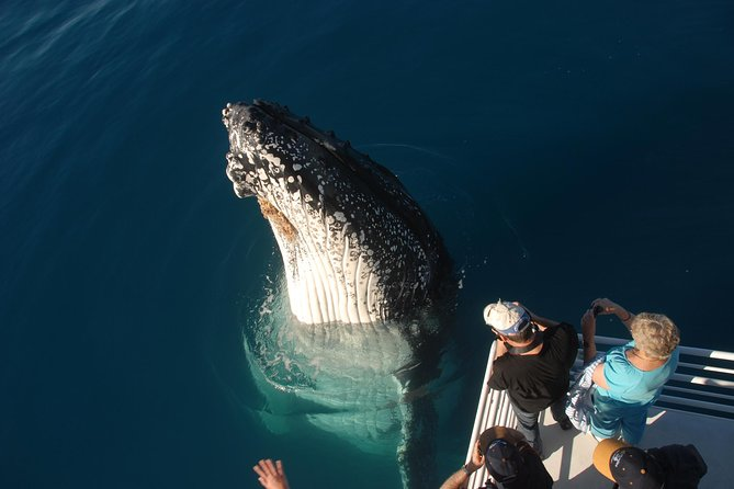 Whalesong Cruises - Hervey Bay Whale Watching experience - Whitsundays Tourism