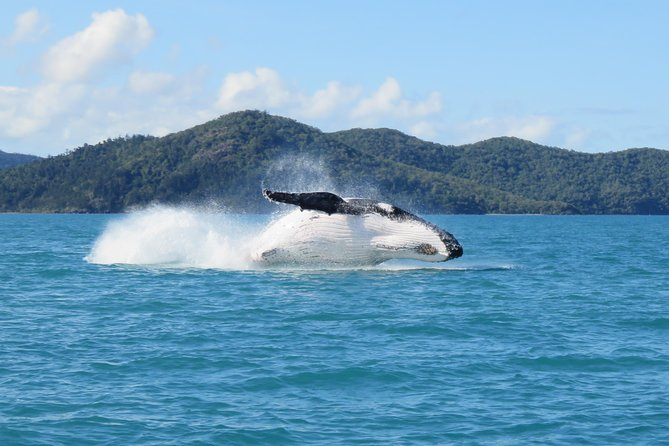 Whitsundays Whale Watching Cruise from Airlie Beach - Whitsundays Tourism