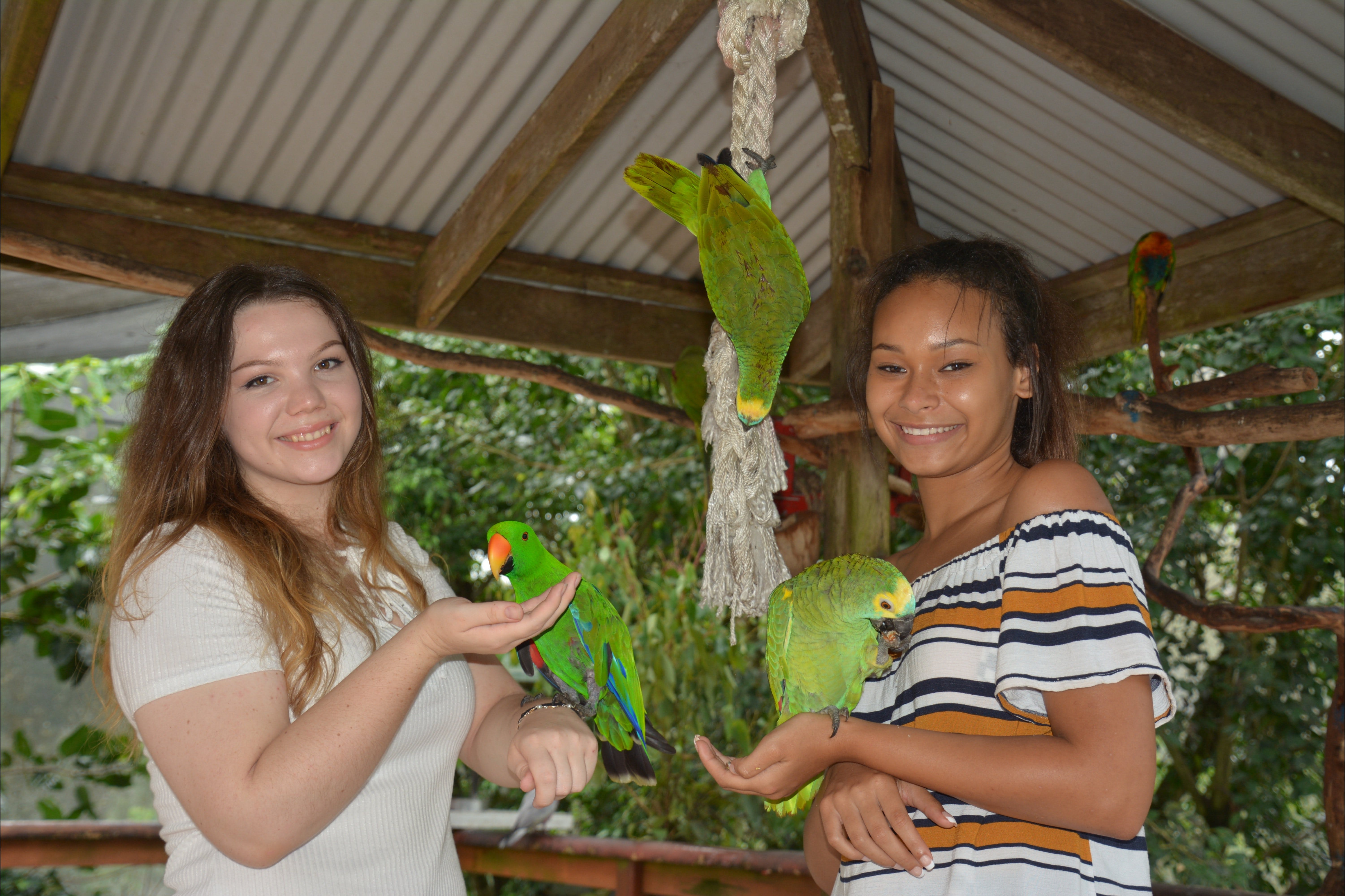 Birdworld Kuranda - Whitsundays Tourism
