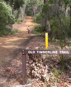 Old Timberline and Sidings Rail Trails - Whitsundays Tourism